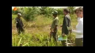 Palmöl schadet uns und unserer Umwelt