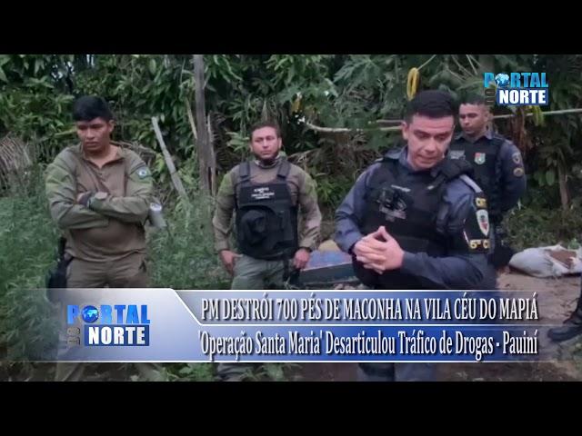 'Operação Santa Maria' destrói plantação de maconha no interior do Amazonas