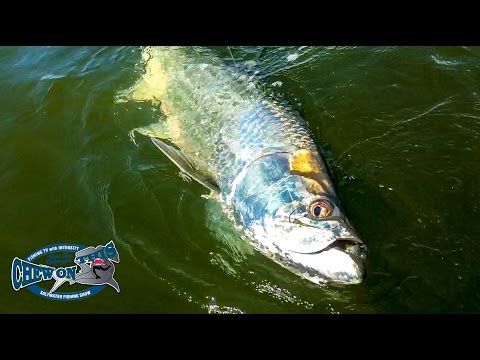 HUGE RIVER TARPON!! –  FISHING SOUTH FLORIDA