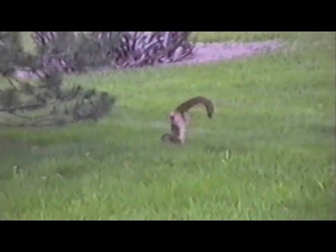 Squirrel Does a Handstand
