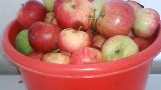 Самодельная сушилка для яблок(Самодельная инфракрасная сушилка для фруктов и грибов за 30 минут. Греющая пленка шириной 80 см как на видео,..., 2014-01-24T07:23:15.000Z)
