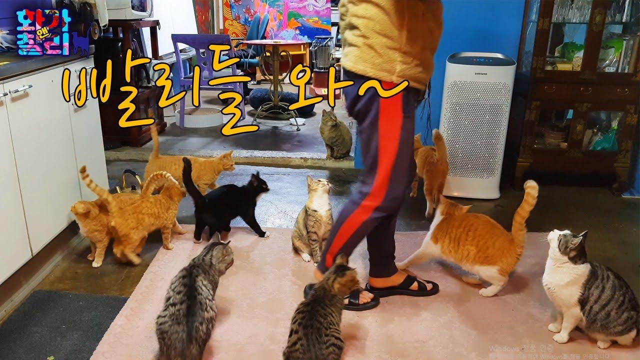 길고양이들이 제발 건강하길 바라는 마음! 창고 한번 보실래요? [아깽일지 15/0107]