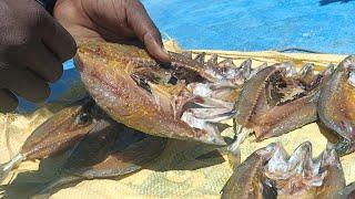 Mackeral Fish Prepared Metheod in Driedfish