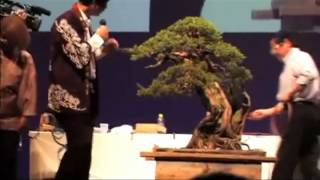 bonsai focus masahiko kimura
