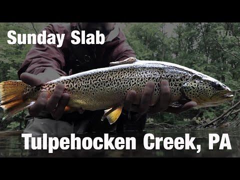 WB - Fly Fishing Sunday Slab, Tulpehocken Creek, PA - May '17