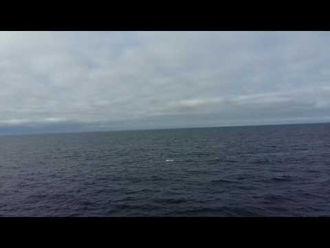 Bluewhale spotted between Jan Mayen and Iceland