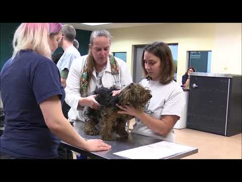 27 Yorkies Rescued from Suspected Former Breeder - YouTube
