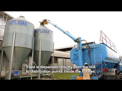 Seng Choon Corporate Video Mandarin with English subtitles 成春农场农场简介(华语说明,英文字幕)