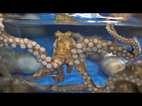 Korean Fish Market - Cutting Live Octopus | Live Sashimi