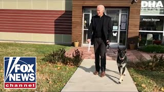 What's wrong with Biden's dog? Famous 'Dog Whisperer' gives expert opinion