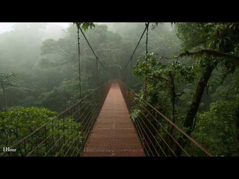 1 Hour Rain and Thunder;Sleep,Relaxing,Meditation ASMR Sound HD High Quality