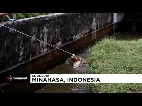 شاهد: تمساح عملاق يهاجم سيدة إندونيسية ويقتلها  - نشر قبل 57 دقيقة