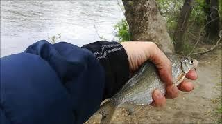 Рыбалка на реке Воронеж 08 05 2021 Мотыль лучше червя