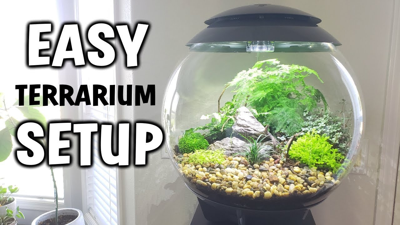 How To Set Up A Closed Terrarium With Plants Easy Tutorial Youtube