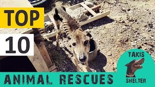 Top 10 animal rescues  6 years Takis Shelter