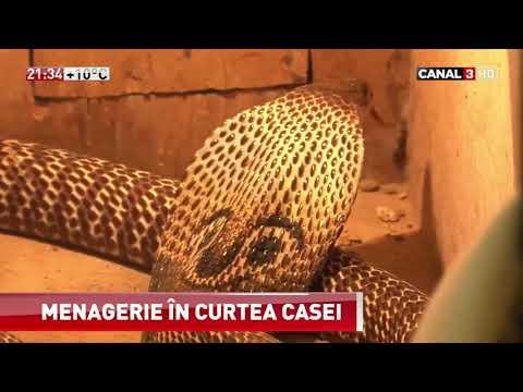Un fost vânător de șerpi din Ungheni şi-a amenajat o adevărată grădină zoologică în curtea casei