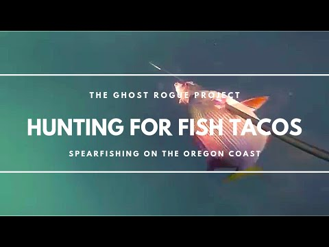 The Hunt For Fish Tacos, Spearfishing On The Oregon Coast