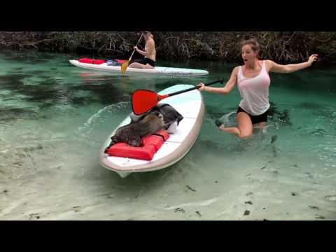 la pelea entre una kayakista y un mapache ladron se hizo viral