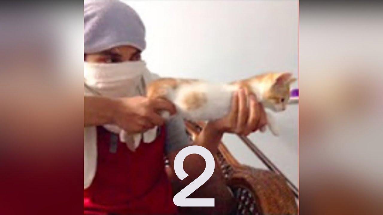 اجمل لقطات القطط المضحكه جداً #2