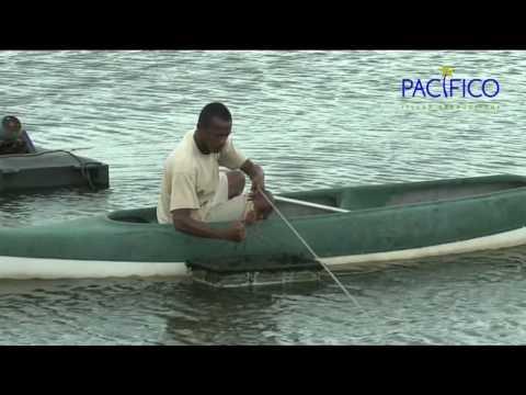 Madagascar, Le Miracle De La Crevette