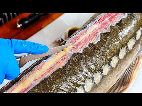 Thai Food – YUMMY GIANT STURGEON FISH COOKING Bangkok Seafood Thailand