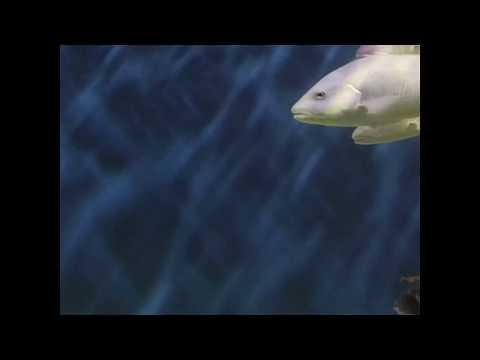 Thomasu0027 Testimonial About Living Art Aquatics   Duration: 17 Seconds.