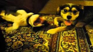 """Iggy Pup, Margot And """"pandemonium"""""""