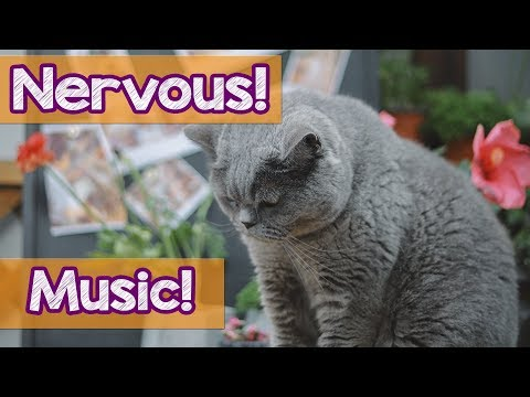 How To Help Nervous Cats? Music to Help My Anxious, Nervous & Shy Cats and Kittens! Keep My Cat Calm