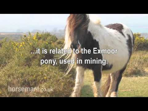 The Horsemart breed guide to Dartmoor