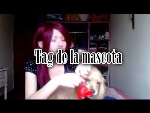 TAG:  furry friend El tag de la mascota