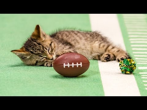 Catnip on the Field _ Kitten Bowl III