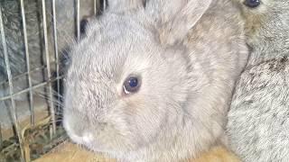 Сколько можно заработать на выращивании кроликов \\ 10 ЛАЙФХАКОВ КОТОРЫЕ ОБОГОТЯТ ВАШУ ЖИЗНЬ