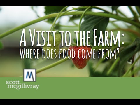 a-visit-to-the-farm:-where-does-food-come-from?