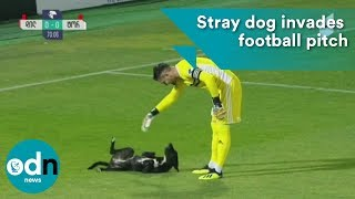 Stray dog invades football pitch in Georgia