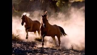 Клип - лошади