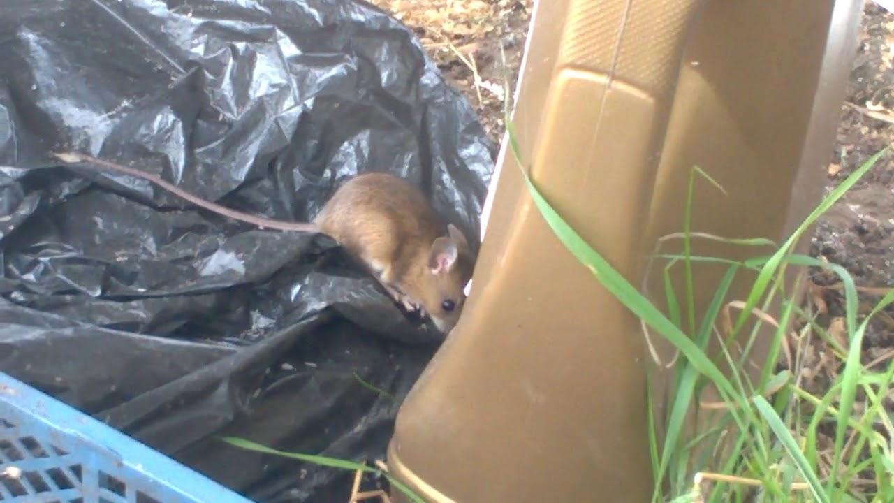 тест ультразвукового отпугивателя мышей