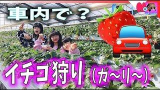 車内でイチゴ狩り!超オススメw【ももかチャンネル+のえのん番組】