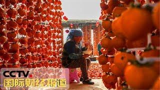 [国际财经报道]投资消费 记者探访陕西临潼 柿子还在树上未熟| CCTV财经