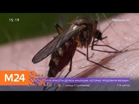 Ростуризм предупредил о вспышке лихорадки Денге в Таиланде - Москва 24
