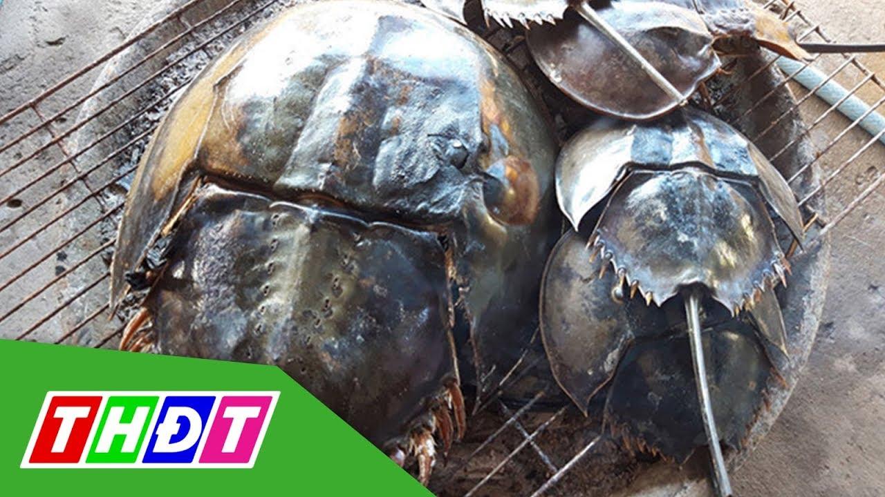 7 người ngộ độc nghi do ăn nhầm so biển | THDT