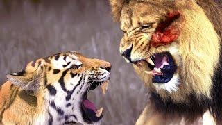 タイガーとライオンの戦い.