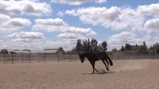 SOLD!!! BECK FARMS Offers For Sale - IZA FLASHN MY LASHES - 2013 Mare