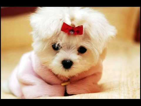 Cute/Funny Dogs - YouTube