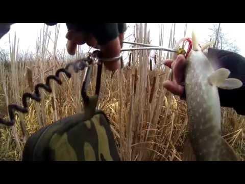 Видео щука на озере