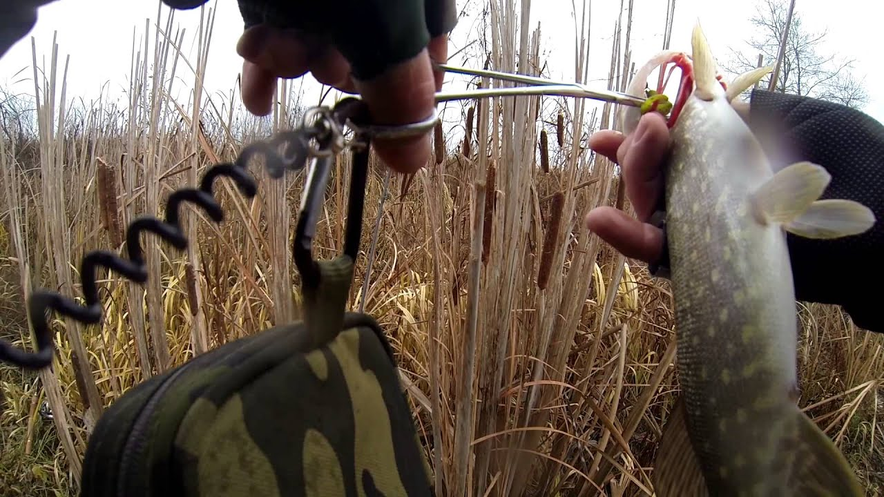 ловля щуки на торфяных озерах