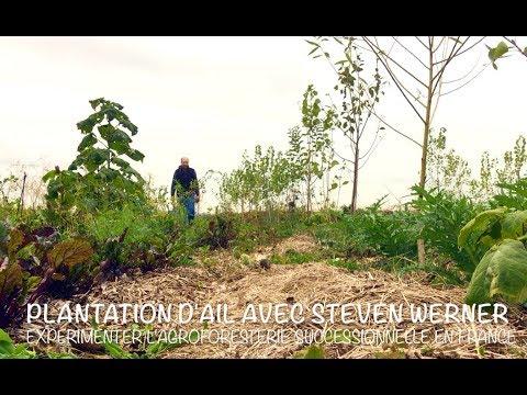 Plantation d'ail en agriculture syntropique - Steven ...