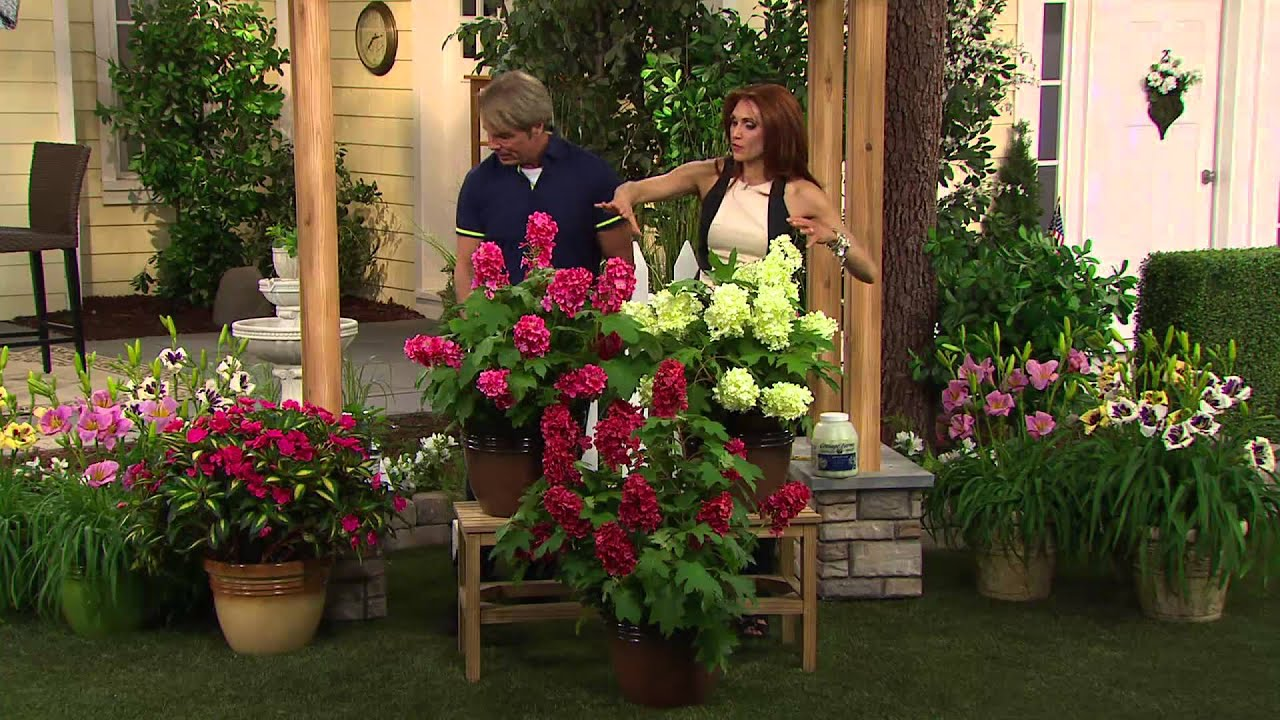 Cottage Farms 2-pc. Ruby Slippers Oakleaf Hydrangea with Albany ...