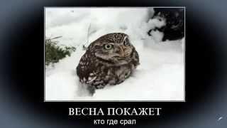 Забавные животные (слайд-шоу) Funny animals (slideshow)
