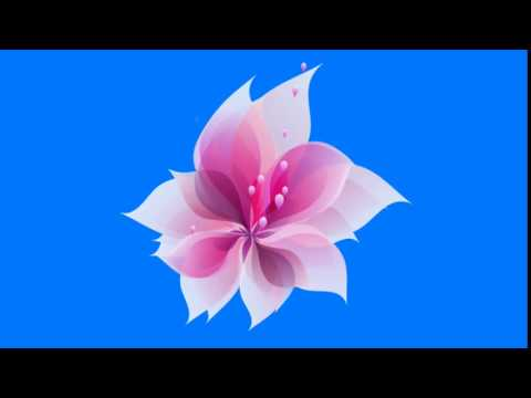 Animated Flower Blooming Green Screen thumbnail