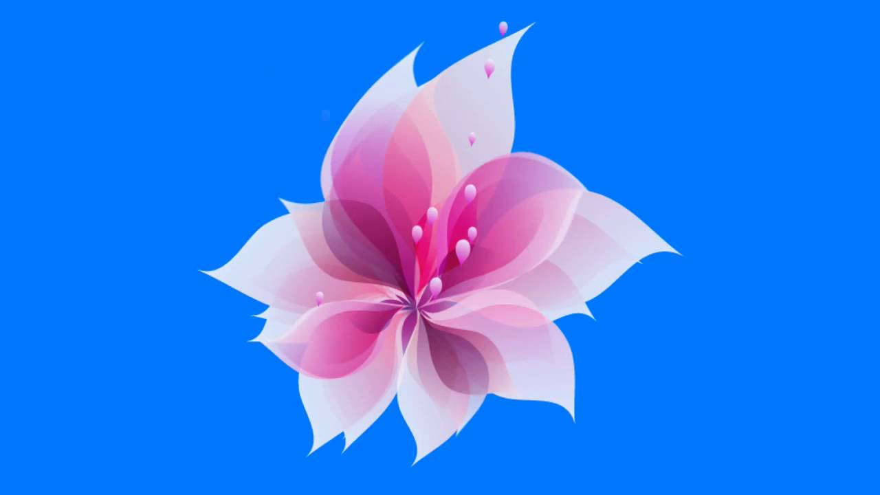 Animated Flower Blooming Green Screen - YouTube for Animated Flowers Blooming  585ifm